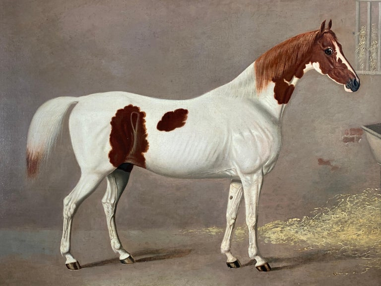 A SKEWBALD HORSE IN A STABLE - BY G. JACKSON.   Fine, large, and high quality oil on canvas of a skewbald horse in a stable. Signed G. Jackson. Pinxt and dated 1830 lower right.  A rare example by the celebrated animal painter G. Jackson, who was an