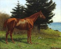 Horse Portrait, Quamichan BC 1894