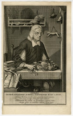 Portrait from Ambonian Cabinet of Curiosities by Rumphius - Engraving - 18th c.