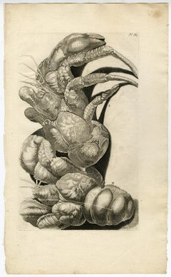 Coconut Crab - Ambonian Cabinet of Curiosities by Rumphius - Engraving - 18th c.