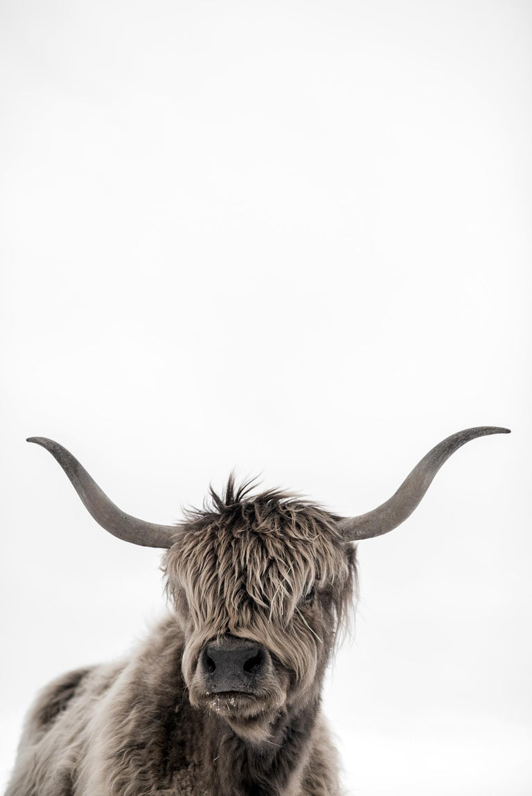 Guadalupe Laiz Black and White Photograph - Highland Cattle