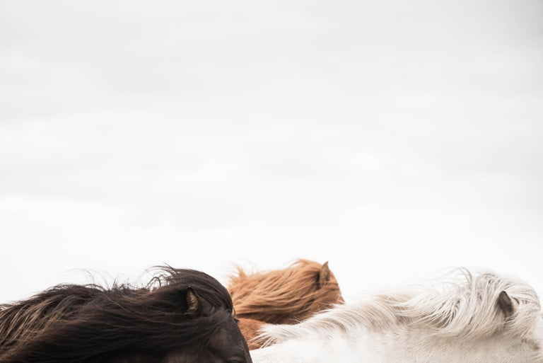Guadalupe Laiz Black and White Photograph - Horses of Iceland