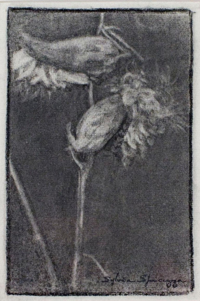 In this drawing, Sylvia Spicuzza presents the viewer with a dark, subtle view of two milkweed pods, bursting forth with cotton. Examples like this show the ability of Spicuzza to draw in a naturalistic style, where most of her work is usually in a