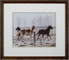 'Jacob's Horses, Ashland, WI' original photograph by Jacob Obletz