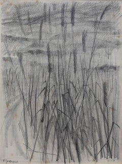 'Feather Reed Grass', Pencil Drawing on Paper, 1951