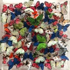 Michael Olsen, Northern Brown Angus, Butterfly Art, Quirky Art, 3D Art