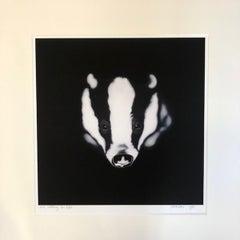 I'm Watching You, Steve Shaw, Badger Art, Animal Prints, Contemporary Print