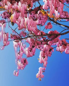 Blossom, Katie Hallam, Flower Art, Digital Print, Photographic Artwork, Bright