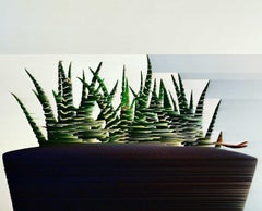 Katie Hallam, Cactus, Digital Art, Contemporary Affordable Art, Still Life Print