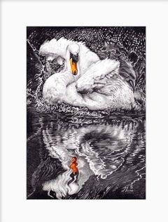 David Truman, Beauty & Reflection, Original Artwork, Swan Art, Bird Drawings