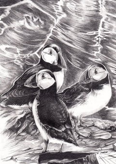 David Truman, Puffins, Original Animal Drawing, Bempton Cliffs Art