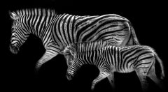 Zebra Mother and her Foal – Max Garner Reidy – Animal Art for Sale