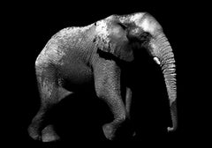 Elephantis – Max Garner Reidy – Animal Art for Sale Online, RA Summer Exhibition