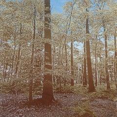 Anna Harley, English Beech Mini, Limited Edition Print, Landscape Art