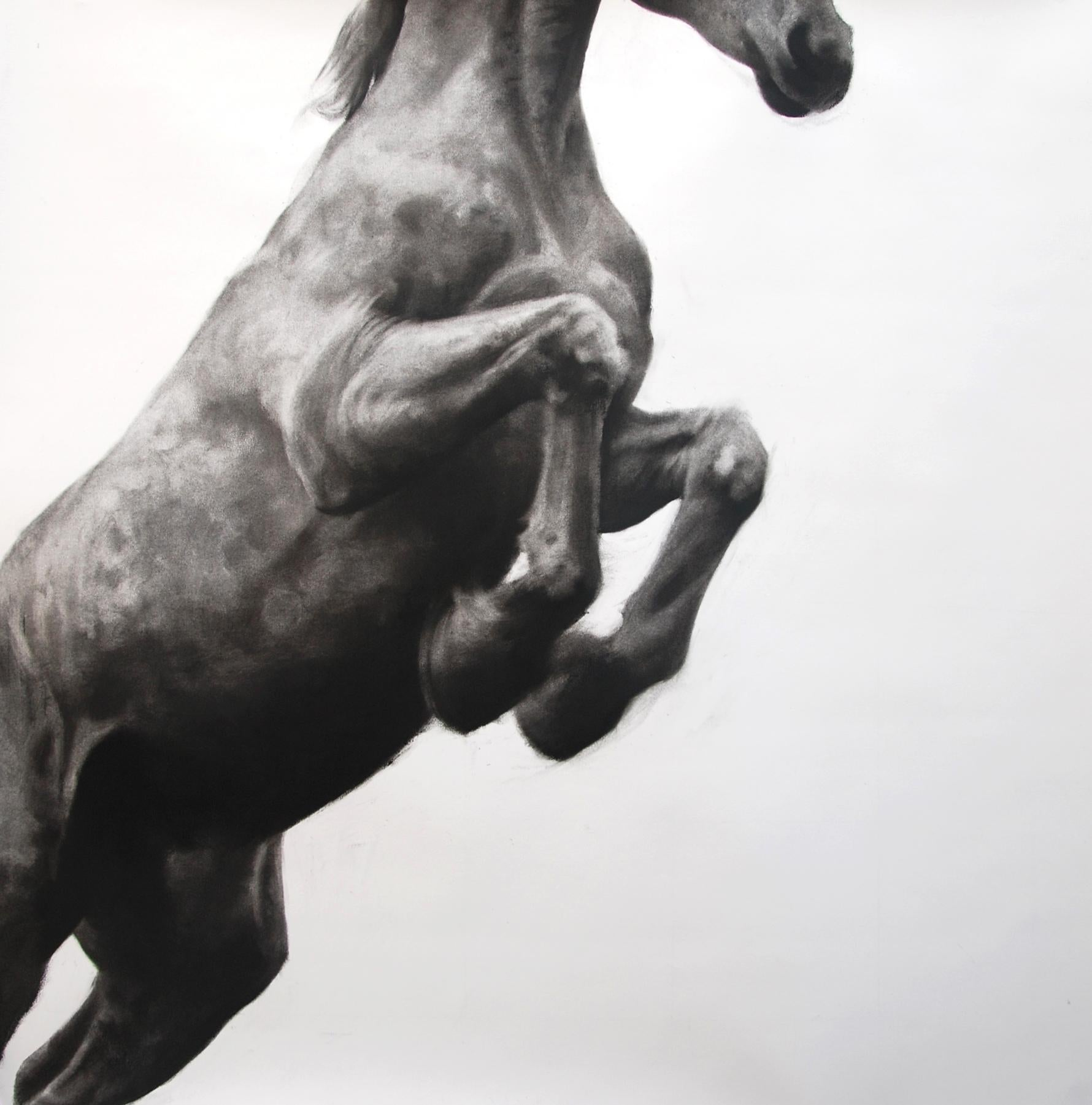 Puissance, Horse Drawing, Charcoal and graphite on Fabriano paper, white frame