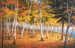 Birch Grove Morning