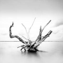 Driftwood - Framed - Ltd Ed of 10