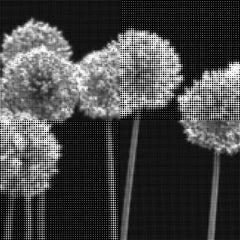 """Untitled """"Allium"""""""
