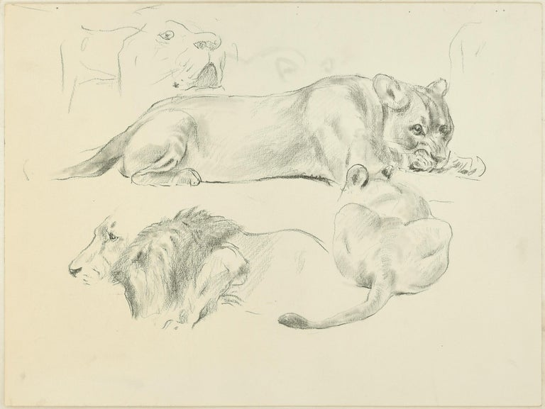 Lions is a beautiful pencil original drawing on ivory-colored paper, with interventions with blender, realized in XXi century by the German artist Wilhelm Lorenz, best know as Willi Lorenz.  A lioness and a lion portrayed in profile and at rest,