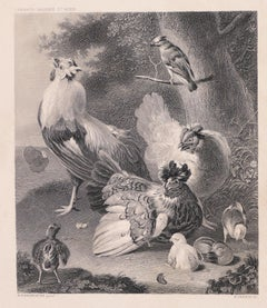 Chicken Family - Original Lithograph by W. French - Late 19th Century
