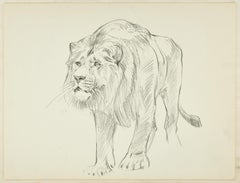 Lion - Original Pencil Drawing by Willy Lorenz - Mid 20th Century
