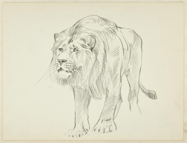 Wilhelm Lorenz Animal Art - Lion - Original Pencil Drawing by Willy Lorenz - Mid 20th Century