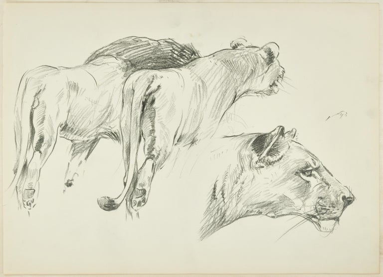 Felines is a beautiful pencil original drawing on ivory-colored paper, realized in XX century by the German artist Wilhelm Lorenz, best know as Willi Lorenz.  A lion and a lioness are portrayed from the back with their typical plush step and an