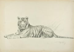 Tiger - Original Pencil Drawing by Willy Lorenz - Mid 20th Century