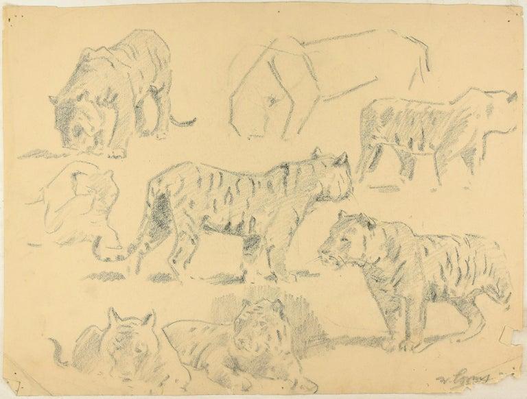 Wilhelm Lorenz Animal Art - Studies of Tigers - Original Charcoal Drawing by Willy Lorenz - Mid 20th Century