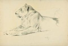 Lioness - Original Pencil Drawing by Willy Lorenz - 1940s