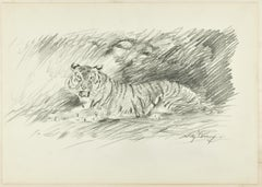 Roaring Tiger - Original Pencil Drawing by Willy Lorenz - 1940s