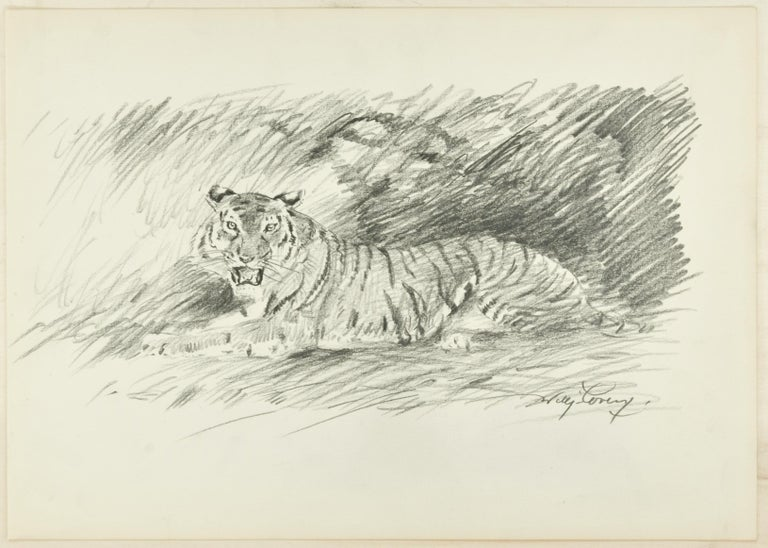 Roaring Tiger is a beautiful pencil original drawing on ivory-colored paper, realized in 1940s by the German artist Wilhelm Lorenz, best know as Willi Lorenz. Signed in pencil on lower right margin.   This is a  wonderful study representing a