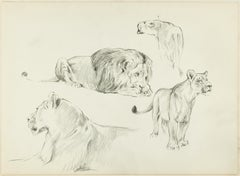 Study of Felines - Original Pencil Drawing by Willy Lorenz - 1950s