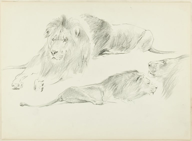 Wilhelm Lorenz Animal Art - Study of Lions - Original Pencil Drawing by Willy Lorenz - 1940s