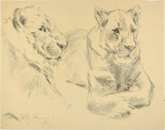Lionesses - Original Charcoal Drawing by Willy Lorenz - 1949