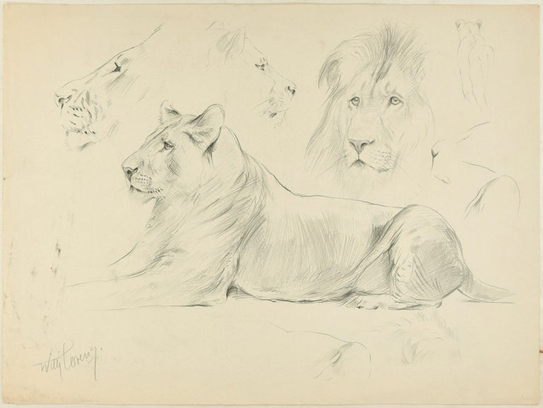 Sketch is amazing original pencil drawing on ivory-colored paper, realized by the German artist Wilhelm Lorenz, best know as Willi Lorenz. Signed in pencil on lower left margin.  This is a preparatory study representing a lioness lying down at rest