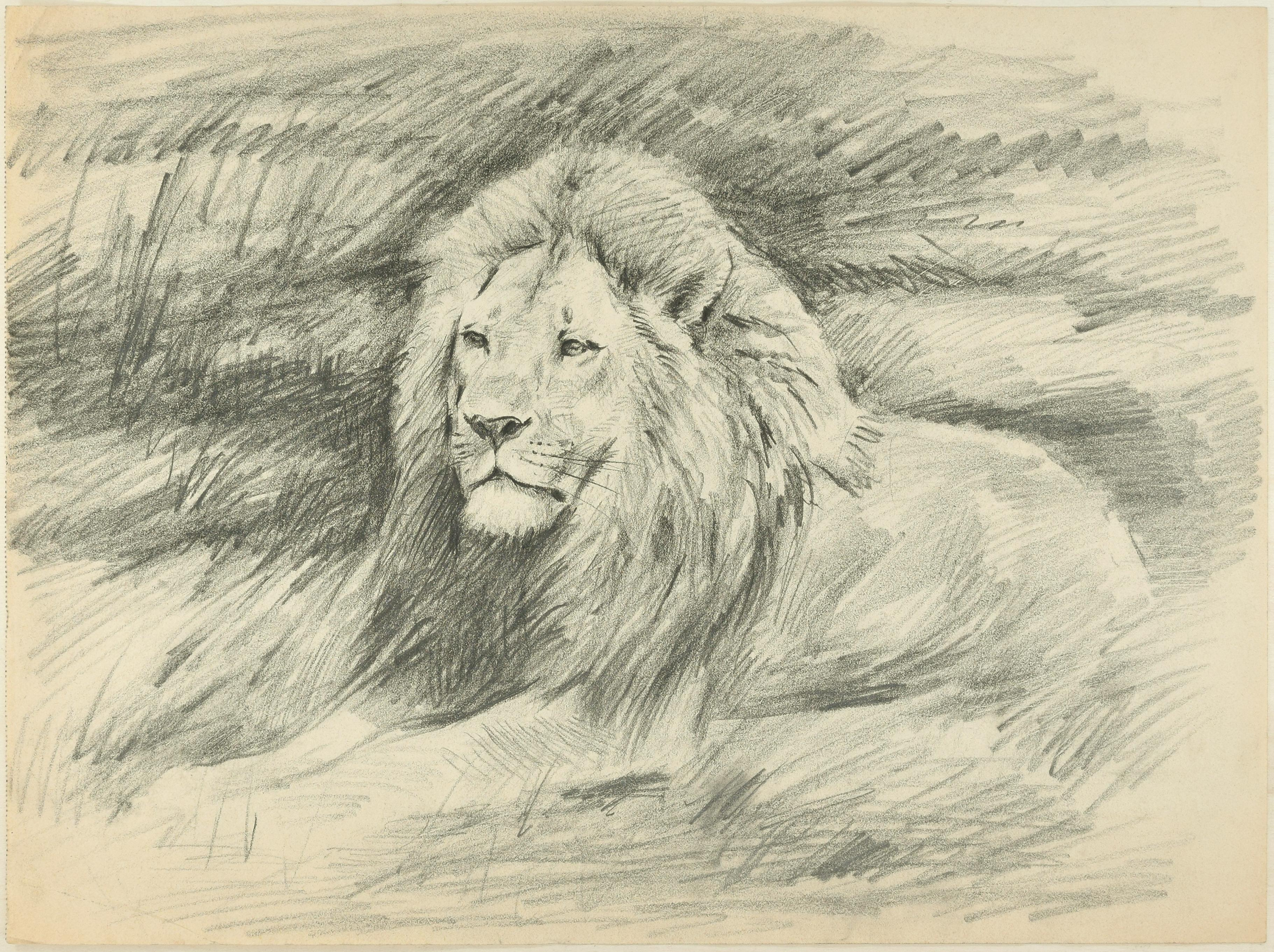 Shape of a lion original pencil drawing by willy lorenz 1940s
