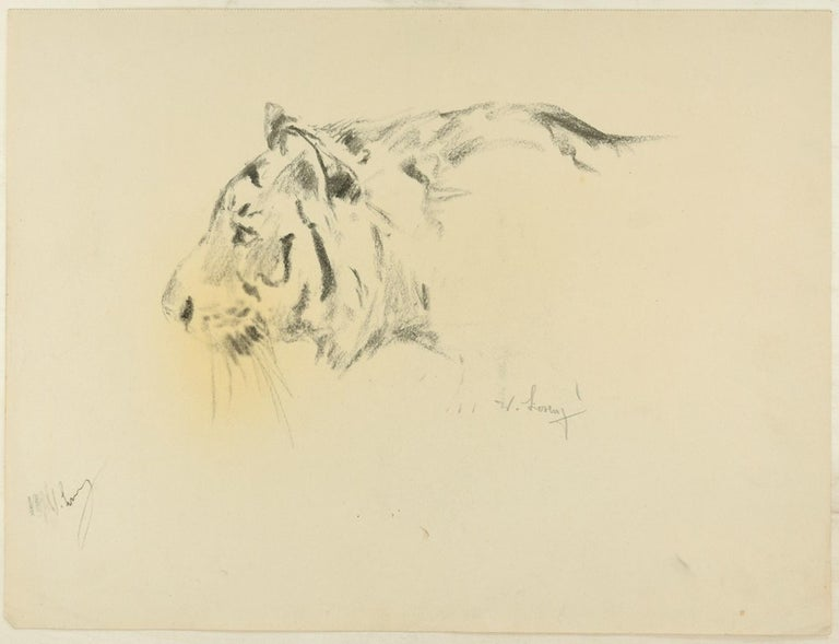Profile of a Tiger is beautiful original charcoal drawing on ivory-colored paper, realized by the German artist Wilhelm Lorenz in 1940s, best know as Willi Lorenz (German, 1901–1981). Signed twice in pencil on lower right and lower left