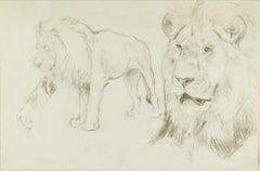Foreground of a Lion - Original Pencil Drawing by Willy Lorenz - 1940s