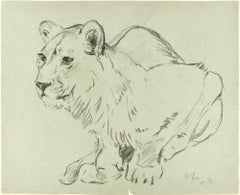 Crouched Lioness and Rabbits - Original Pencil Drawing by Willy Lorenz - 1971
