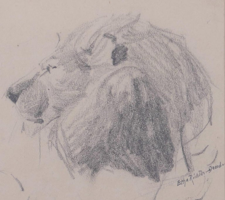 Lion is an original pencil drawing by the German artist Etha Richter (Dresda,1883 - Dresda,1977).  Hand-signed in lead on the lower right: Etha Richter - Dresden.   On the paper in which the drawing is mounted, the artist signed again specifying it