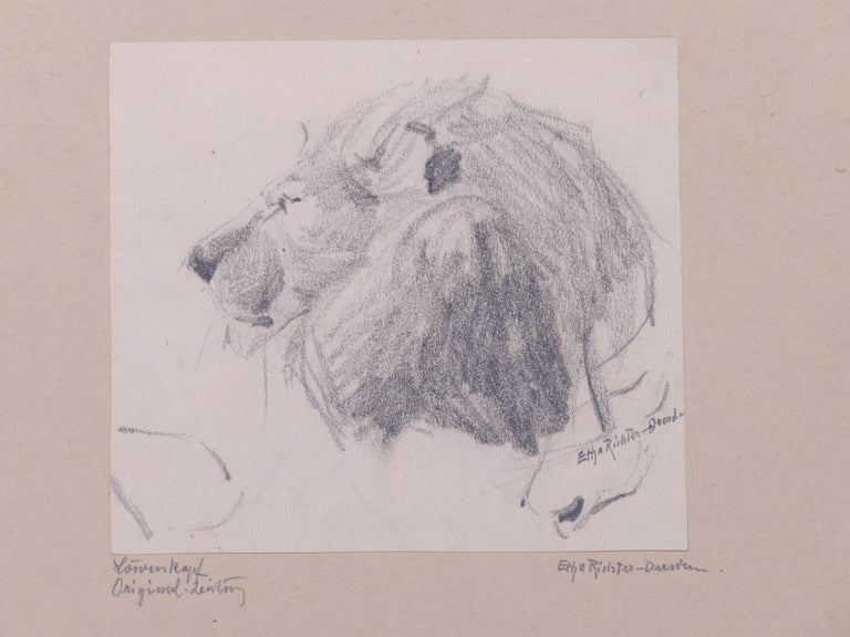 Head of Lion - Original Pencil Drawing by Etha Richter - 1930s For Sale 3