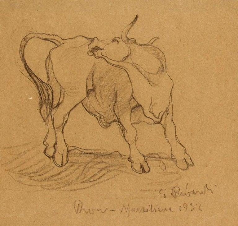 Bull - Original Pencil Drawing by G. Rivaroli . 1932 For Sale 1