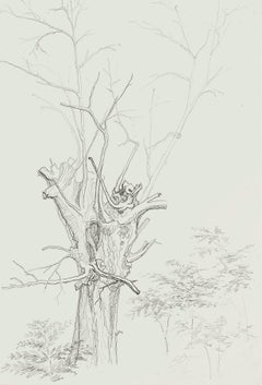 Winter Tree - Original Pencil Drawing by French Master mid 20th Century