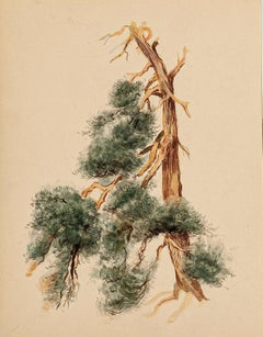 Tree - Original Ink and Watercolor Drawing by French Master mid 20th Century