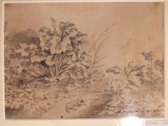 Dog with Plants - Original China Ink Drawing by Jan Pieter Verdussen - 1751