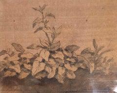 Plants - Original China Ink Drawing by Jan Pieter Verdussen - 1740