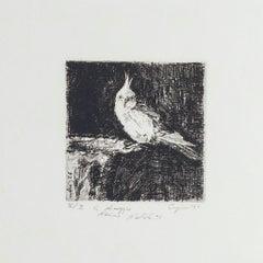 Parrot - Original Etching on Paper by Valerio Cugia - 1995