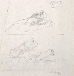 Lions - Original Drawing in Pencil by Willy Lorenz - 1958