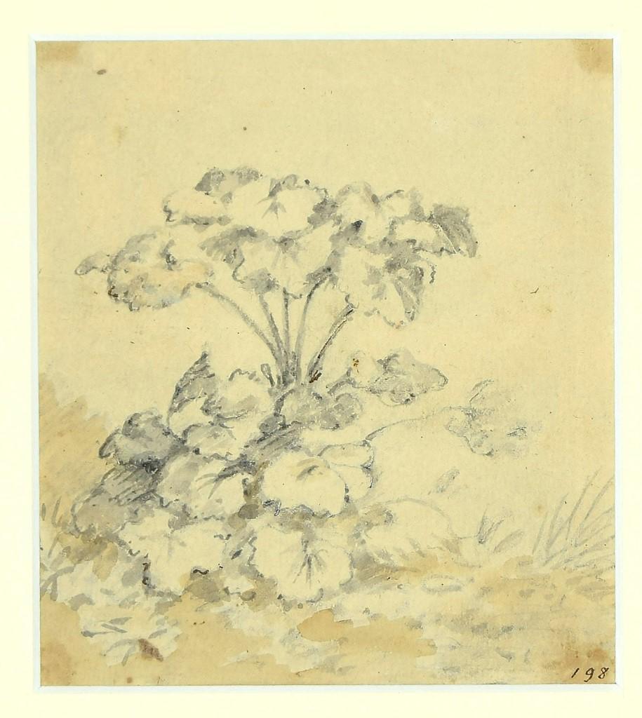 Garden's Flowers - Ink and Watercolor Drawing by Jan Pieter Verdussen - 1750s